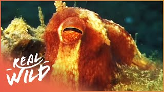 Meet The Fish That Build Their Own Homes! | Undersea Homes | Real Wild Channel