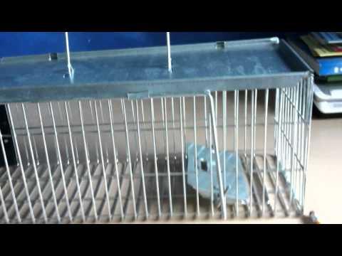 Jaula trampa cepo para ratas y ratones funnycat tv - Trampas para ratas grandes ...