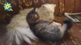 بالفيديو أسرار قد لا تعرفها عن تربية القطط الأليفة بالمنزل ؟ !