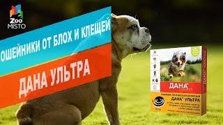 Ошейники от блох и клещей для собак ДАНА УЛЬТРА  | Обзор ошейника от блох и клещей ДАНА УЛЬТРА