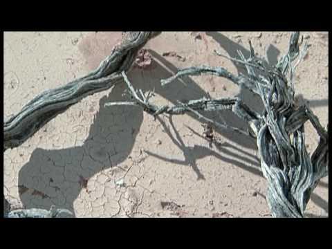アフリカンファンタジー   藤村美樹