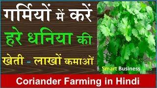 गर्मियों में करें हरे धनिया की खेती होगी लाखों की कमाई | Coriander farming | धनिया की खेती