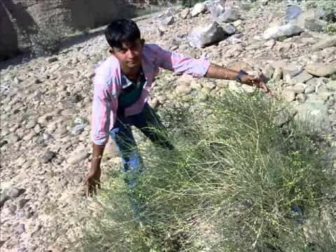 faruk khan