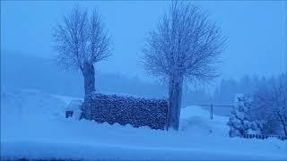09.01.2019 - Schneemassen und Schneebruch im Vorderen Bayerwald