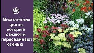 видео Многолетние цветы