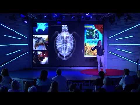 Sea Turtle Survival and Conservation | Amber Kuehn | TEDxHiltonHead