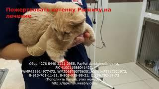 Котенок с переломами задних лап был найден в лесу | fracture of hind legs in kitten