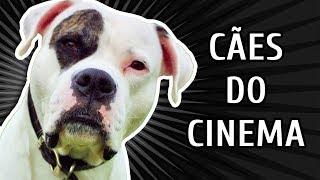 TESTE: RAÇAS DE CÃES DE FILMES