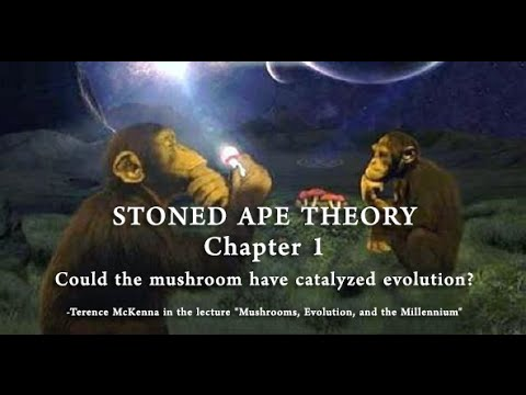 Stoned Ape Theory- Chapter 1