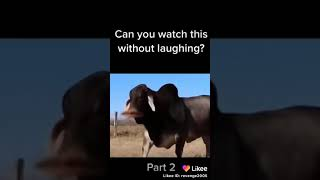 Funny Animals Compilation of 2019