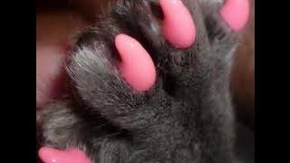 Удаление когтей у кошек_Семья кошек