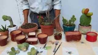 Género Opuntias   Cactus   2
