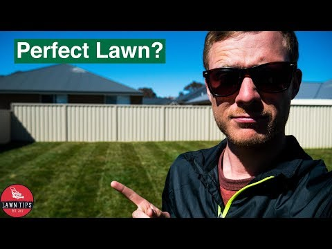 10 Tips To Having A Perfect Lawn