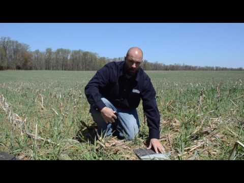 How to Sample for Slugs in Soybeans Using Shingle Trapping and Residue Sampling Methods