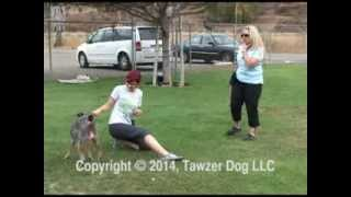 Canine Freestyle Collides With Disc Dogging - Pamela Johnson