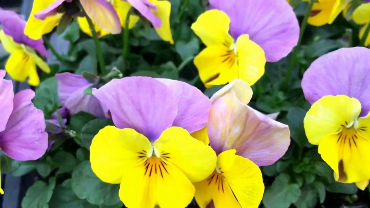 Diy make a pretty fairy garden with tiny colorful flowers make it diy make a pretty fairy garden with tiny colorful flowers make it beautiful spring planting mightylinksfo