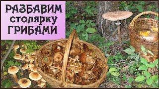 51 Поход за грибами август 2019