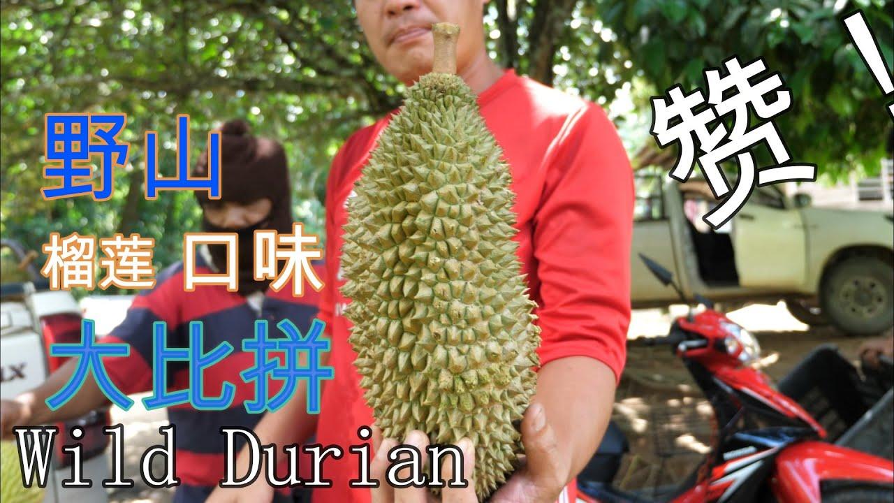 霹雳野山榴莲口味大比拼!Wild Durian Malaysia