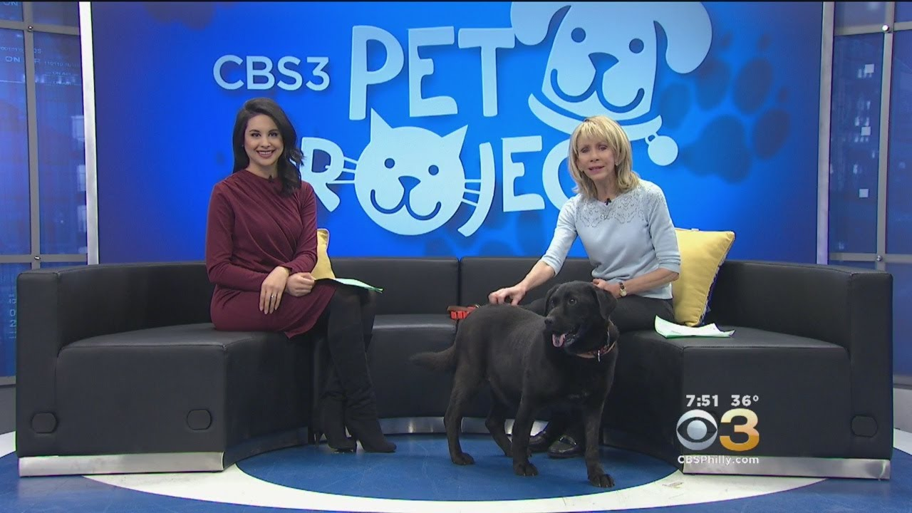 CBS 3 Pet Project: Walking Your Dog