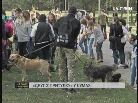 UA:СУМИ: Фестиваль «Друг з притулку» відбувся у Сумах