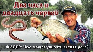 ФИДЕР челлендж Что можно поймать на 20 червей за 2 часа в реке Как ловить на фидер