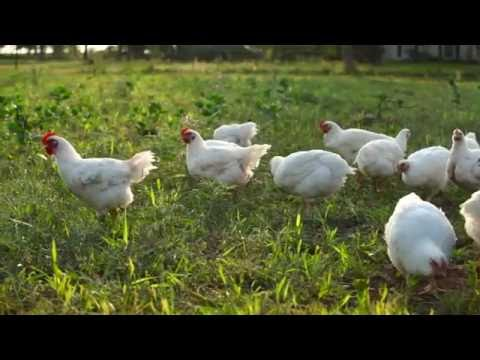 Non GMO Pastured Poultry by Hugelland