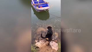 Heroic dog saves friend trapped on boat in China