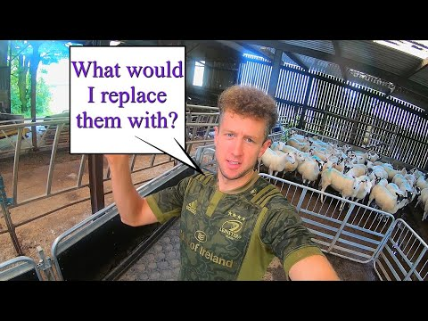 breeding-sheep-prices-are-sky-high!-should-i-sell?