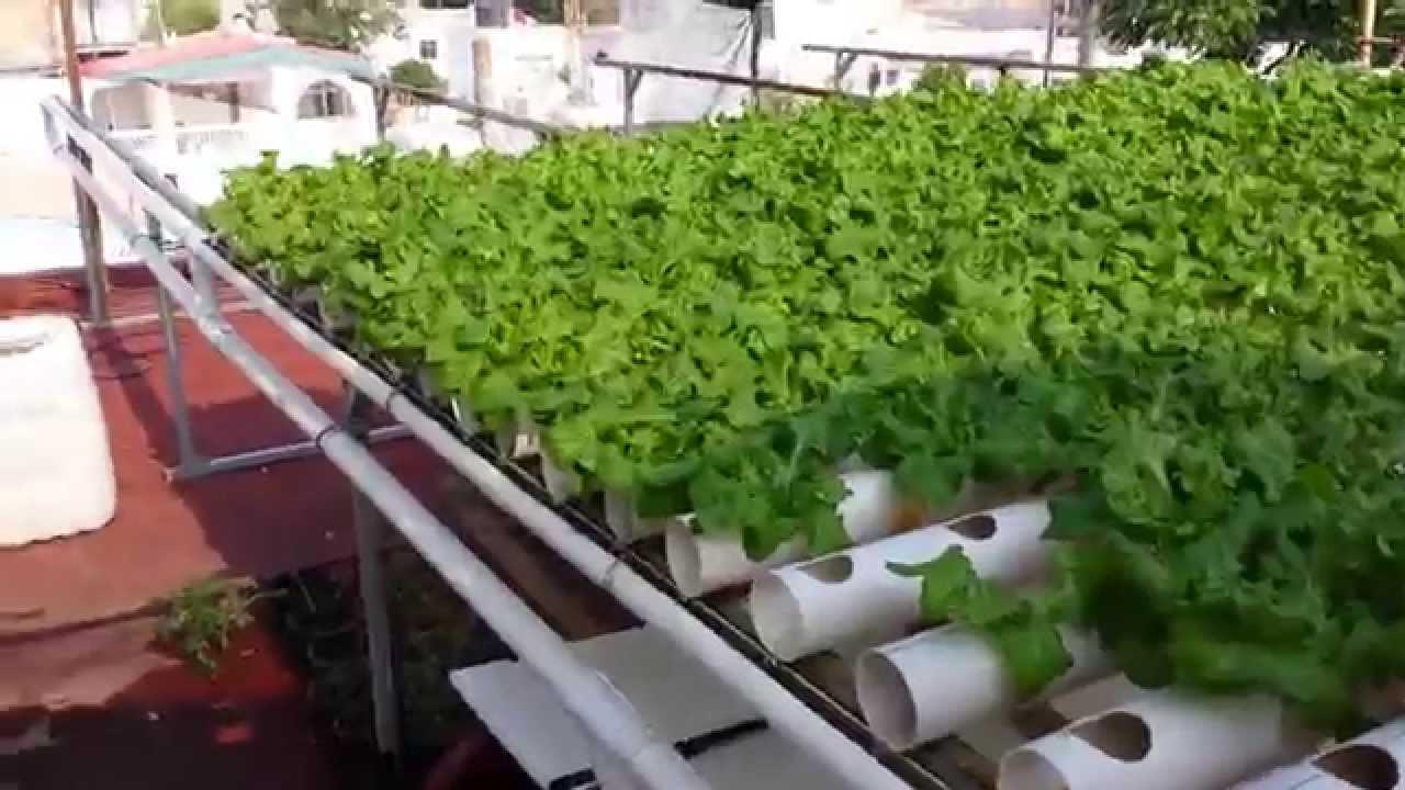 Hidroponia sistema nft 1152 plantas en 21 m2 youtube for Imagenes de hidroponia