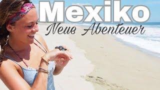 VLOG aus Mexiko... Delphine, Meeresschildkröten und neue tolle Projekte