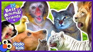 Animals Who Love Each Other Like Family | 2 Hrs Of Animal Videos For Kids | Dodo Kids