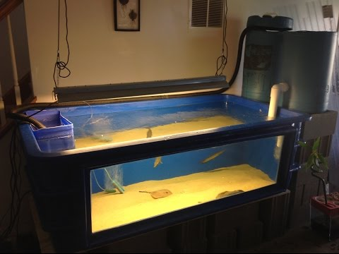 PENTAIR 270 Gallon Fiberglass Aquarium With Stingrays And Gar