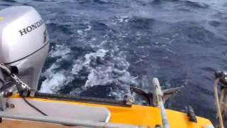 Catamaran Sailing - Test
