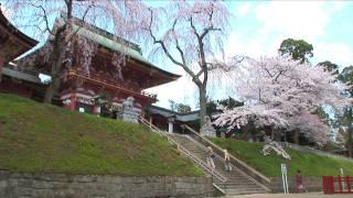 桜のある風景 010 宮城県塩釜市「塩釜神社」