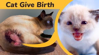 Cat Giving Birth to 3 beautiful Kittens . They Are So Cute