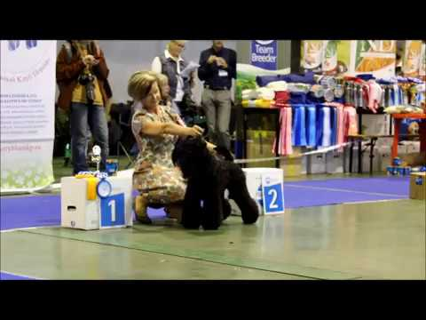 Kerry Blue Terrier Show, National Championship 2016_part 9 (Best of Breed)