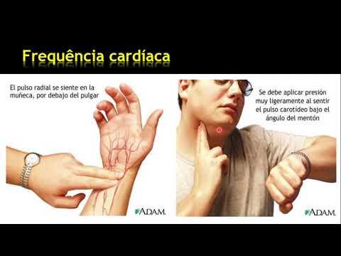 adaptaÇÕes-cardiovasculares-ao-exercÍcio-fÍsico