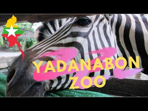 YADANABON ZOO MANDALAY MYANMAR