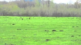 BIF Excalibur Saratoggah & the Bunny