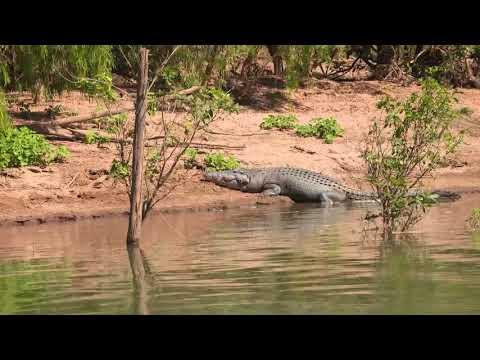 Destination WA - Fishing For Barramundi In The Ord River