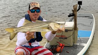 SNOOK FISHING  on a STAND UP PADDLE BOARD Catch Clean & Cook Bluegabe Style !!!!