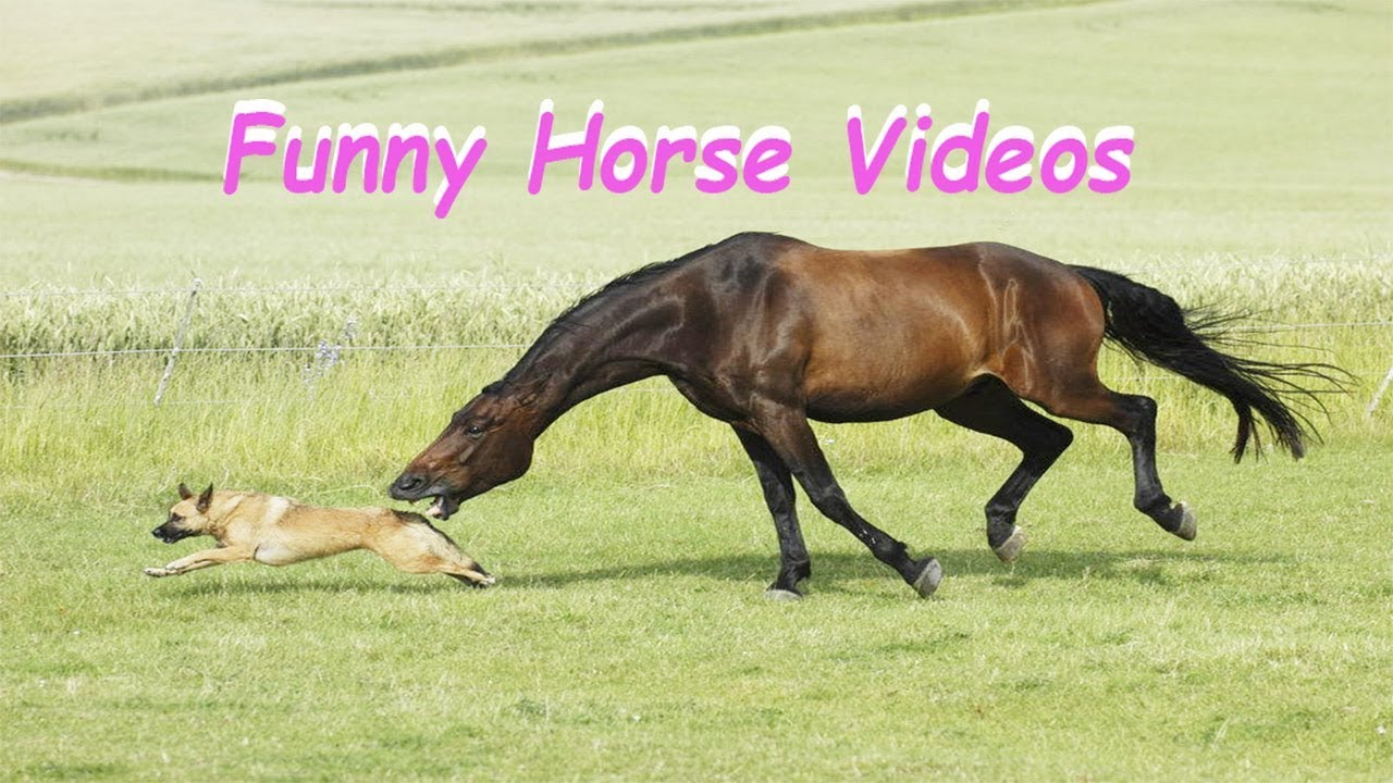 funny horse videos for kids