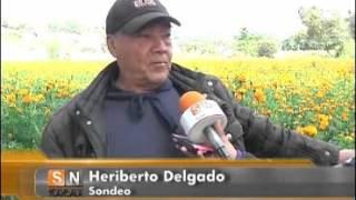 Reportan productores de Tepeyanco cosecha positiva de cempasúchil