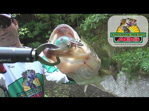 ABSバス釣り動画 シャロークランクの虫パターン 夏のトップウォーター革命