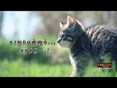 Cat Story Tamil - Lotus News