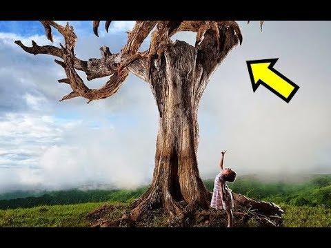 Na prvi pogled izgleda kao obično stablo, ali kad pogledate izbliza ostat ćete bez TEKSTA !