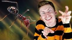 Miten muurahaisyhteiskunta toimii?
