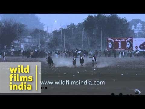 Kila Raipur : Mule cart racing competition