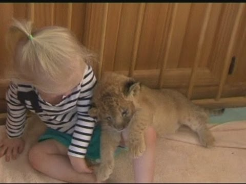 TODDLER'S PET LION: Cub shares play pen with 3-yr-old