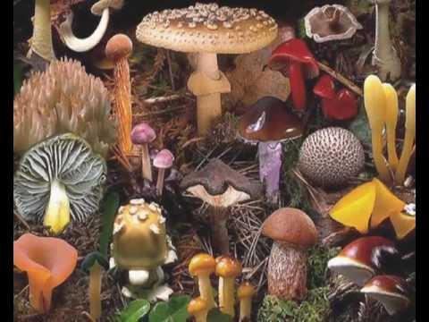 Kingdom Monera Protista & Fungi (CH_28)
